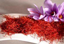 صورة مفيد للجسم وقد يتسبب بالموت .. الزعفران الطبيعي وفوائده وأضراره وطرق تمييزه عن المغشوش