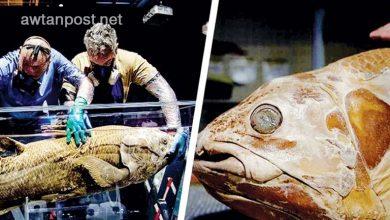 صورة كانوا يظنون أنها انقرضت .. العثور على سمكة أقدم من الديناصورات