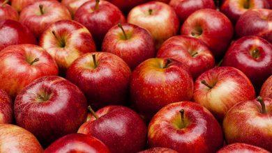 صورة يدعم صحة الجهاز العصبي ولا ينصح بتناول بذوره لهذا السبب .. ماذا تعرف عن الفوائد الصحية للتفاح