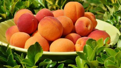 صورة يعزز صحة الجهاز الهضمي والقلب ويعالج فقر الدم والإمساك .. أبرز 7 فوائد لفاكهة المشمش